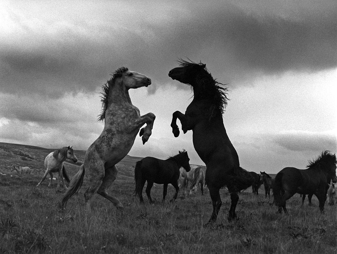 Black White Photography By Dejan Selakovic